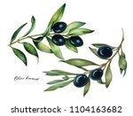 watercolor set of oliva branch...   Shutterstock . vector #1104163682
