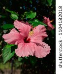 vivid flower close up | Shutterstock . vector #1104182018