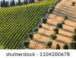 panoramic view of olive groves  ... | Shutterstock . vector #1104200678