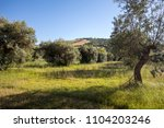 view of olive groves  on... | Shutterstock . vector #1104203246