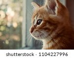 the kitten is hidden  the red... | Shutterstock . vector #1104227996