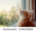 the kitten is hidden  the red... | Shutterstock . vector #1104228002