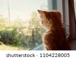 Stock photo the kitten is hidden the red kitten is frightened the blue eyed kitten the kitten s eyes the 1104228005