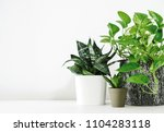 Golden pothos and snake plant on the white wooden table with copy space home and garden concept