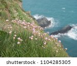 Clover Flowers Grown On A Cliff ...