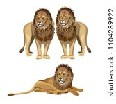 Various Poses Of A Lion. Vecto...