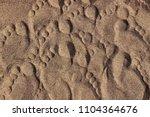 footprints of a man's feet on... | Shutterstock . vector #1104364676