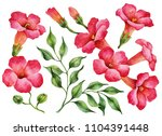 watercolor set of trumpet vine... | Shutterstock . vector #1104391448