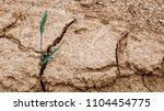 wheat ear in dry cracked soil....   Shutterstock . vector #1104454775