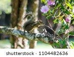 wonders of the brazilian fauna   Shutterstock . vector #1104482636
