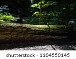 Tree Log On Forest Floor