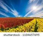 red and yellow flowers...   Shutterstock . vector #1104657695
