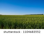 outdoor nature view on green... | Shutterstock . vector #1104683552