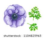violet anemone flower painted... | Shutterstock . vector #1104825965