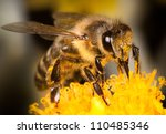 Honey Bee On Yellow Flower ...