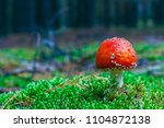 Amanita Muscaria. Red Poisonou...