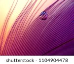 water drop magnifying the grid... | Shutterstock . vector #1104904478