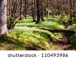 Beautiful wild flowers in summer forest - stock photo
