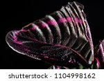 close up of pink leaf of... | Shutterstock . vector #1104998162