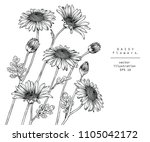 sketch floral botany collection.... | Shutterstock .eps vector #1105042172