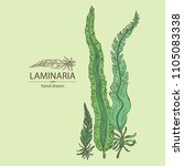 laminaria  laminaria seaweed ... | Shutterstock .eps vector #1105083338