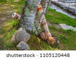 buoys buoy safety floating...   Shutterstock . vector #1105120448