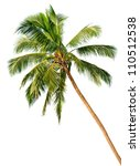 Stock photo crown of a palm tree of coconut isolated on white background 110512538