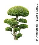 bonsai tree isolated on white... | Shutterstock . vector #1105142822