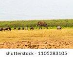 ngorongoro conservation area ...   Shutterstock . vector #1105283105