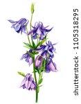 bouquet of bells  purple... | Shutterstock . vector #1105318295