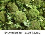 group of broccoli | Shutterstock . vector #110543282