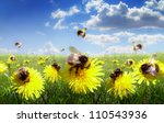 Bumble Bees In The Meadow Of...