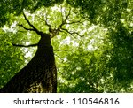 forest trees. nature green wood ... | Shutterstock . vector #110546816