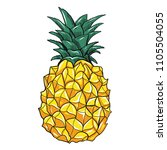 vector hand drawn pineapple... | Shutterstock .eps vector #1105504055
