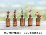 different wildflowers bottle... | Shutterstock . vector #1105505618