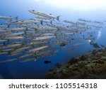 underwater photography wide... | Shutterstock . vector #1105514318