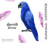 watercolor illustration....   Shutterstock . vector #1105539428