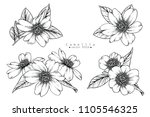 sketch floral botany collection.... | Shutterstock .eps vector #1105546325