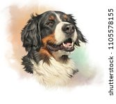 Stock photo bernese mountain dog realistic portrait of berner sennenhund on watercolor background large dog 1105578155