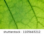 green leaf background pattern | Shutterstock . vector #1105665212