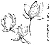 magnolia in a vector style... | Shutterstock .eps vector #1105721672