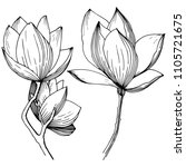 magnolia in a vector style... | Shutterstock .eps vector #1105721675