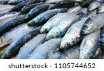 sardines in street during the... | Shutterstock . vector #1105744652