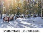 reindeer sleigh safari ride in... | Shutterstock . vector #1105861838