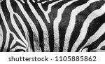 natural texture of the zebra... | Shutterstock . vector #1105885862