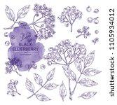 collection of elderberry black  ... | Shutterstock .eps vector #1105934012