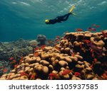beautiful coral reef with lots... | Shutterstock . vector #1105937585