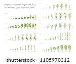 sunflower rapeseed flax...   Shutterstock .eps vector #1105970312