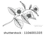 sketch floral botany collection.... | Shutterstock .eps vector #1106001335