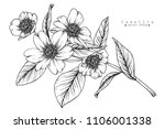 sketch floral botany collection....   Shutterstock .eps vector #1106001338